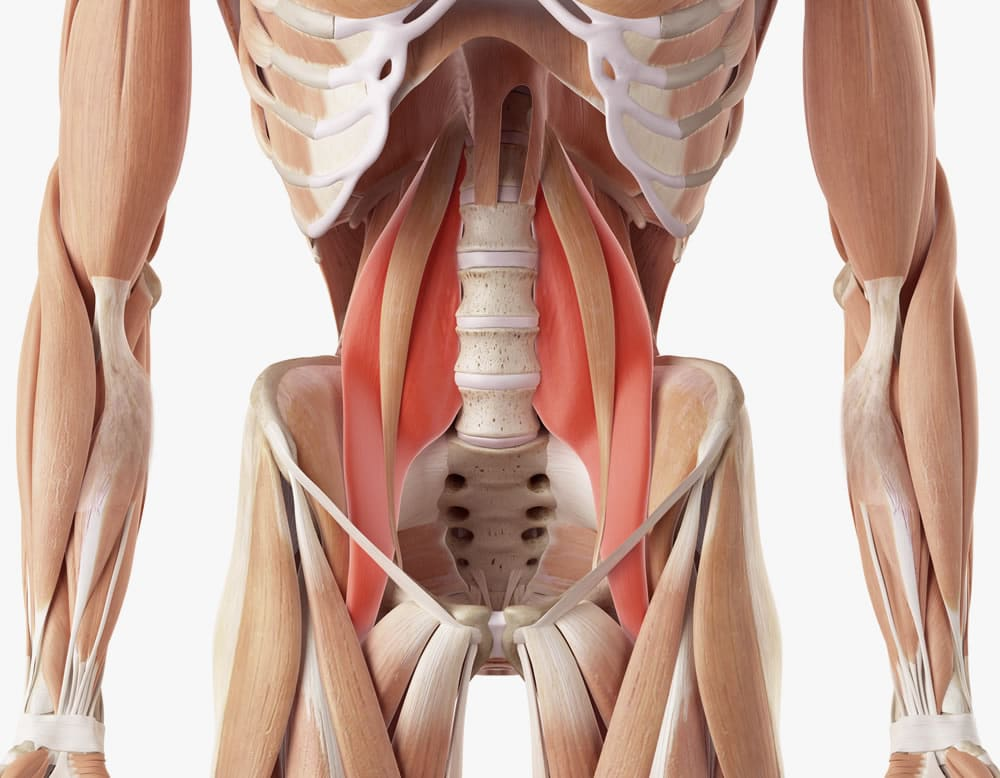 The Athletic Pelvis